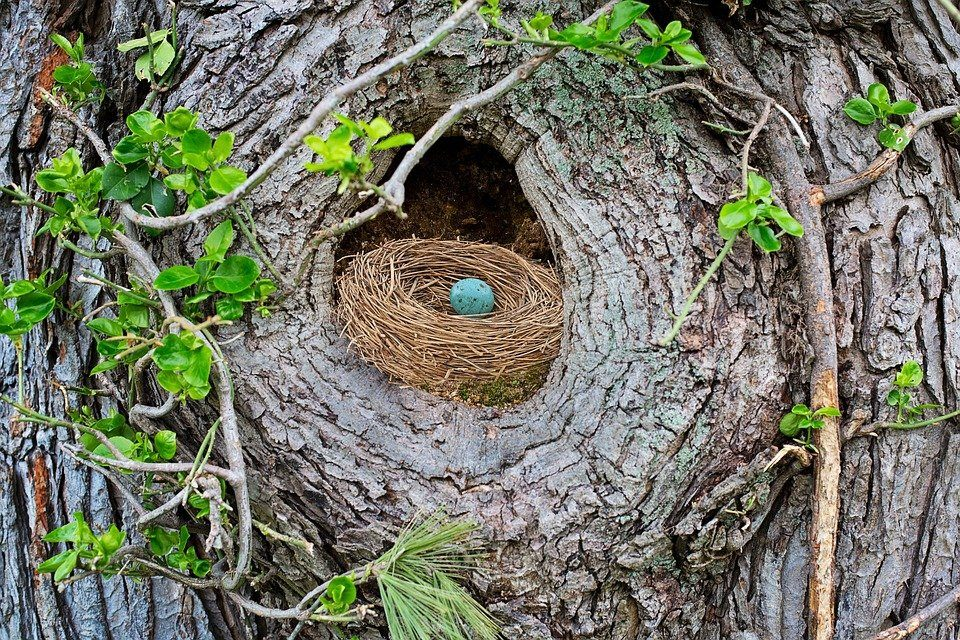 ei in nest in boom